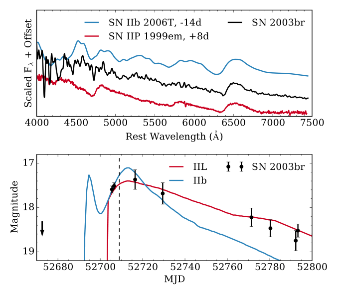Top: spectrum of SN2003br (corrected for