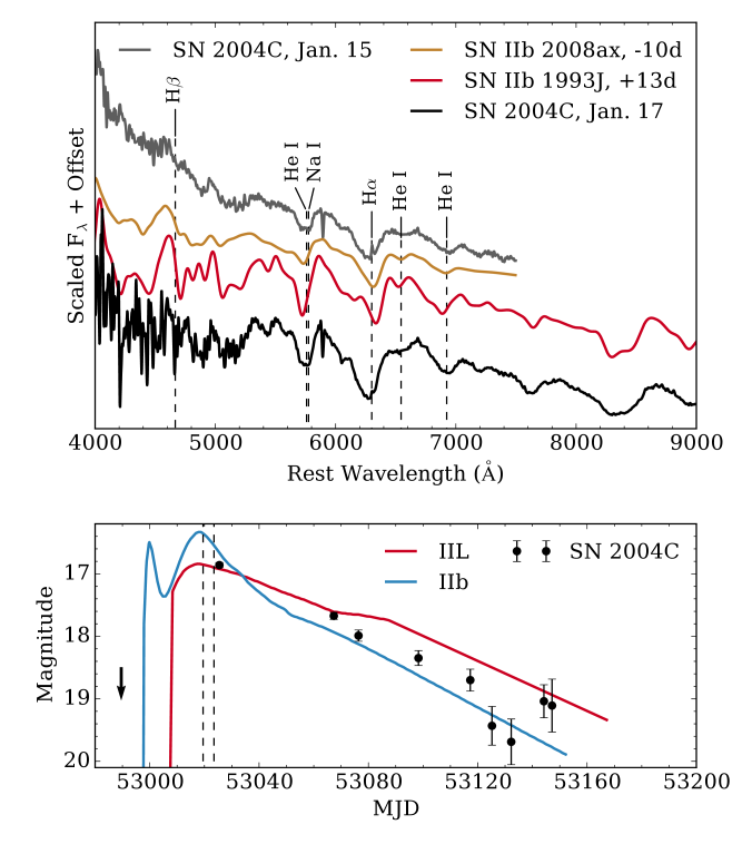 Top: spectra of SN2004C observed on UT2004-01-15 and on UT2004-01-17, alongside a premaximum spectrum of the Type IIb SN2008ax