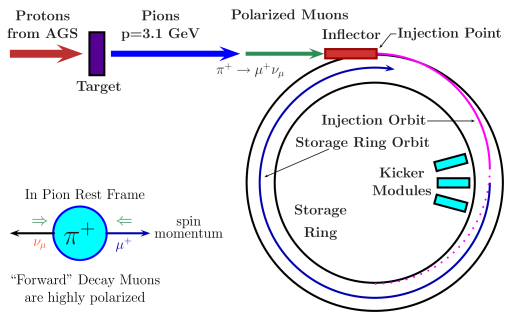 The schematics of muon injection and storage in the