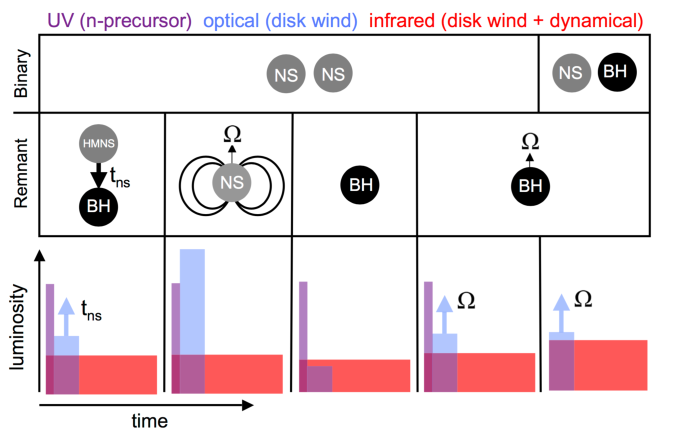 Schematic illustration of the mapping between mergers and kilonova light curves. The top panel shows the progenitor system, either an NS-NS or an NS-BH binary, while the middle plane shows the final merger remnant (from left to right: an HMNS that collapses to a BH after time
