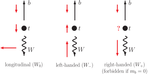 Angular momentum conservation in top quark decay does not allow right-handed
