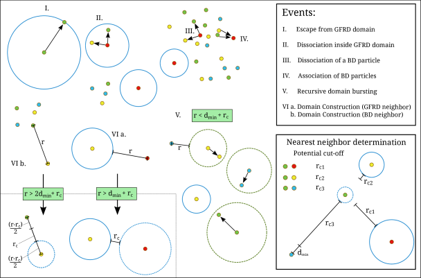 At each BD time step, the algorithm checks whether BD should be interrupted. The BD propagation is halted when the time of the first next event occurs before the global simulation time at the end of the time step. These next events can be any of the following: I. A particle escapes from a GFRD domain; the position of the particle is updated to a randomly chosen point on the surface of the domain and the domain is removed. II. A particle dissociates inside a GFRD domain; the domain bursts and the particle is updated to a position and orientation sampled using Green's functions, and is then replaced by its product particles. III. A BD particle dissociates; it is replaced by its product particles. IV. The binding energy of two BD particles is below the binding threshold; the particles enter the bound state and are replaced by a single product particle. V. The distance from a BD particle to a domain is smaller than