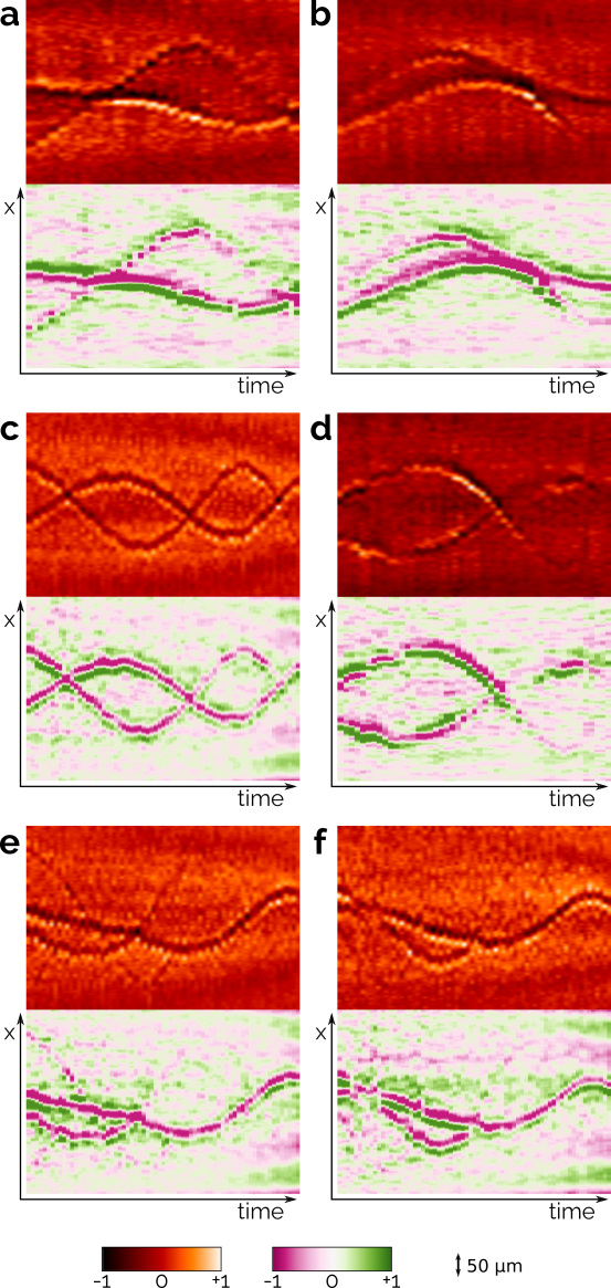 Examples of different interaction mechanisms observed in the case of two approaching vortices. Each temporal sequence is shown twice with two different color palettes; the red palette enhances the contrast, so that also vortices close to the edges can be seen, whereas the pink-green palette better illustrates the vortex orientation in the radial plane. (a,b) Vortices approach and bounce back; (c) their axial trajectories intersect preserving visibility and orientation; (d) they cross producing sudden changes of visibility; (e,f) the visibility of one vortex is almost completely lost after interacting with the other.