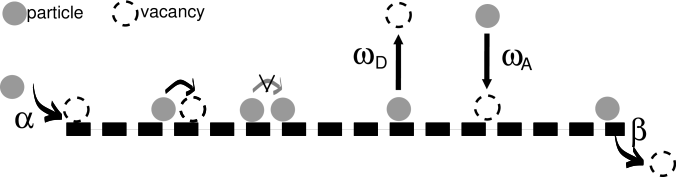 Schematic drawing of the totally asymmetric simple exclusion process with bulk attachment and detachment