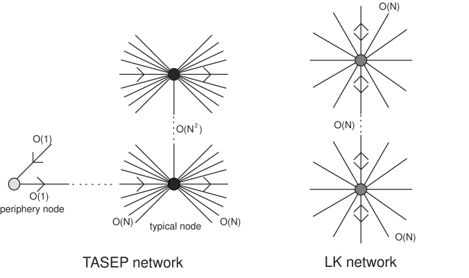 Illustration of the network architecture corresponding to the totally asymmetric simple exclusion process (TASEP) and Langmuir kinetics (LK).