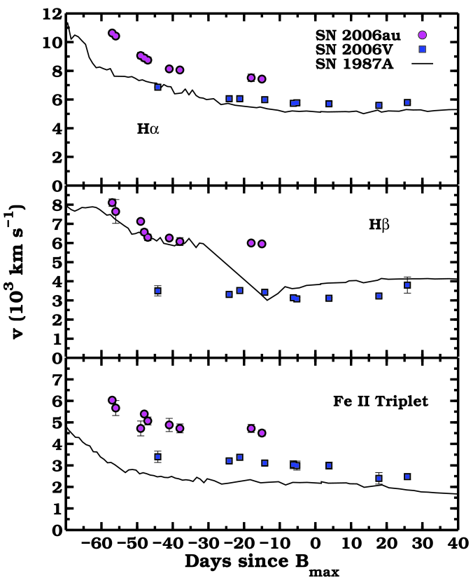 Measured expansion velocities for SNe 2006V, 2006au and 1987A, from the minimum of absorption of H
