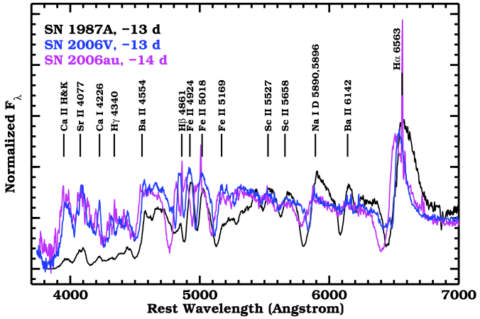 Optical spectral comparison of SNe 2006au, 2006V and1987A, about two weeks before