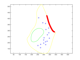 Plots of vesicle locations for a control (left) and a stressed (right) synapse. The active zones are shown by the red curves while the green curves show the boundaries of mitochondria. The yellow curves show the boundaries of the synapses given by their cell membranes.