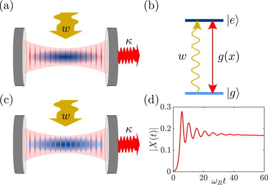 (a) An atomic gas initially forms a Bose-Einstein condensate and is confined within a standing-wave resonator, which emits photons at rate