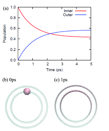 (a) Exciton populations of the inner (red) and outer layers (blue) in two-concentric ten-stacked rings. The structure and exciton populations at (a) 0 and (b) 1 ps are also presented. The pink spheres represent Mg atoms of the BChl molecules, and the size of the Mg atom reflects the population values. In (b) and (c), atoms surrounding the Mg are only shown.