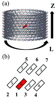 (a) A model of ten-stacked rings for the exciton dynamics. (b) The schematic picture of initially excited monomer (red) and its neighboring monomers in the ten-stacked rings. In (a), farnesyl tails of the BChls are not shown for clarity.
