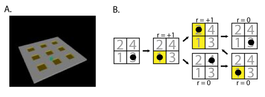 A. Path seeking robot environment. B. The logic of the tasks. We show a simplified example of transitions on a 2x2 grid. In the actual environment, the grid is 3x3, and the robot must learn to move from tile to tile by actuating the rolling ball shown in A.