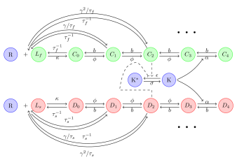 Schematic overview of a kinetic proofreading network. Products from foreign ligands