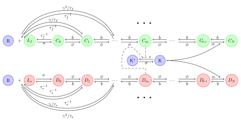 Schematic overview of a general kinetic proofreading network.