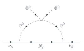 One-loop generation of light neutrino masses.