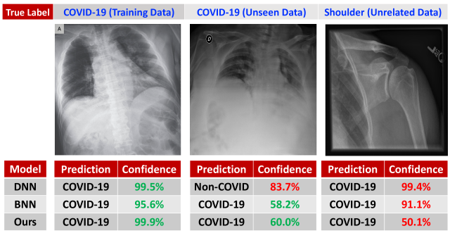 The predictions of deep learning models that are trained to detect the presence of COVID-19 in chest X-Ray images from