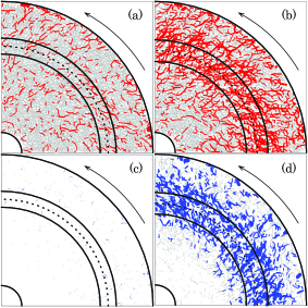 (Color online) Force chain networks of positive normal forces for