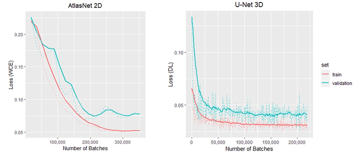 Training and validation curves for one template of AtlasNet and the 3D U-Net.
