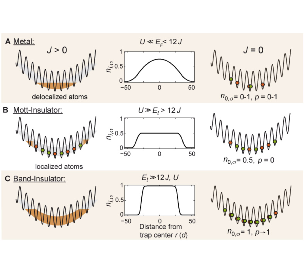 Relevant phases of the Hubbard model with an inhomogeneous trapping potential for a spin mixture at