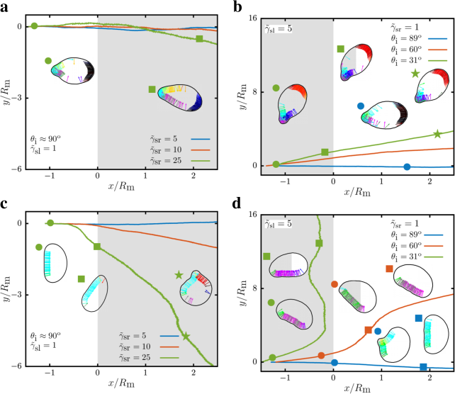 Center-of-mass trajectories of flexocytes at friction interfaces. Flexocytes for various membrane frictions