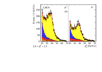 Distribution of muon