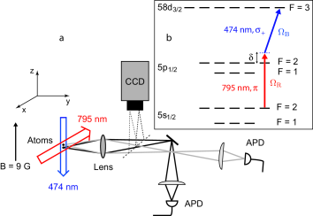 (a) Experimental setup. Two rubidium 87 atoms are trapped in two tightly focused dipole traps (not shown). The quantization axis is set by a 9 G magnetic field. The fluorescence of each trap is collected on two separated avalanche photodiodes (APD) in single photon counting mode. We can also image the two atoms on a CCD camera, which allows to measure the distance between the atoms. (b) The atoms are excited to the Rydberg state by a two-photon transition. An infrared laser at 795 nm propagating along the