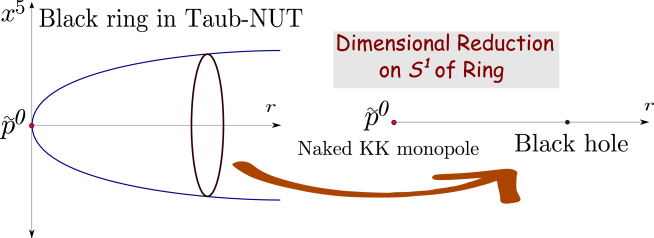 A Black ring away from the centre of Taub-NUT is projected down to a black hole and naked Kaluza-Klein magnetic monopole in four dimensions. The angular momentum carried in the compact dimension will translate to electric charge in four dimensions. An