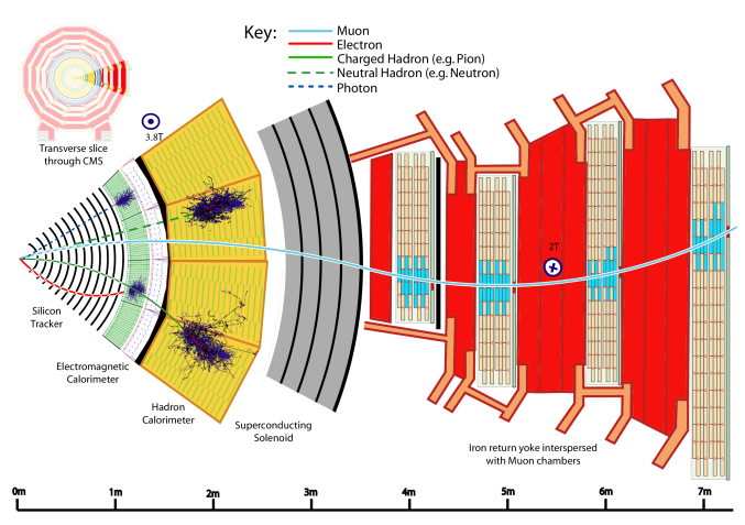 A sketch of the specific particle interactions in a transverse slice of the CMS detector, from the beam interaction region to the muon detector. The muon and the charged pion are positively charged, and the electron is negatively charged.