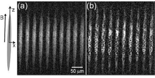 Direct imaging of inhomogeneous spontaneous magnetization of a spinor BEC. Transverse imaging sequences (first 10 of 24 frames taken) are shown (a) for a single condensate probed at