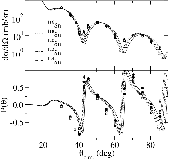 The differential cross sections (top) and polarizations (bottom) for the elastic scattering of 39.8MeV protons from