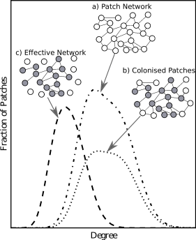 Example of the two step process for finding the degree distribution of the effective network of species