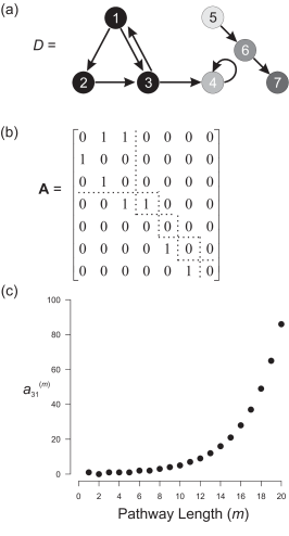 Example digraph, its associated adjacency matrix, and pathway proliferation. (a) Digraph