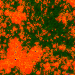 Spatial slices of the ionized and neutral gas density from our radiative transfer simulations with boxsize 53Mpc, all at box-averaged ionized fraction by mass