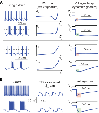A. The transient signature of slow negative conductance cannot be recovered from the static I-V curve, A region of negative conductance in the I-V curve is neither necessary nor sufficient for bursting. B. Slow oscillatory potentials in the absence of sodium do not necessarily discriminate between fast and slow negative conductances. See Methods for details about the simulations.