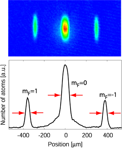Absorption images and vertically summed cross sections of a spinor condensate after 10ms evolution starting with the initially prepared state