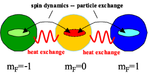 Schematic view of thermodynamics in spinor quantum gases for the example of a spin F=1 system. In this example the states with