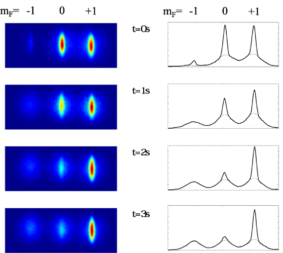 Absorption images and cross sections showing the temporal evolution of a spinor condensate prepared in the states