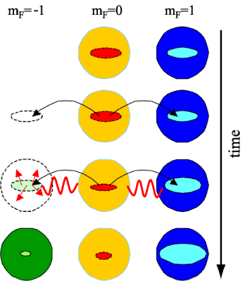 Schematic view of condensate magnetisation in thermally dominated spin dynamics. The top row shows the initially prepared state. Spin dynamics is transferring population from the