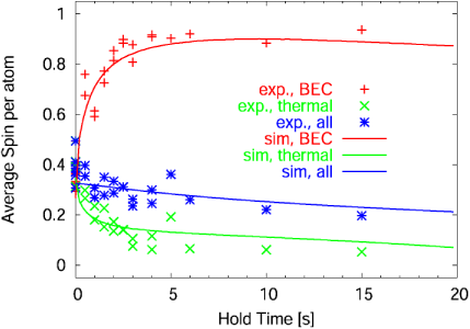 Experimental data versus a simulation for thermally dominated spinor dynamics for an initial preparation of the sample in