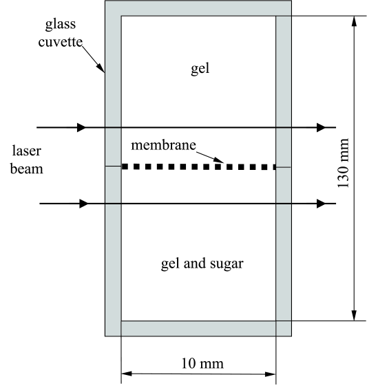 Schematic view of the membrane system under study.