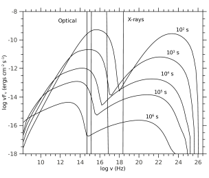Multiwavelength spectra at observer times from