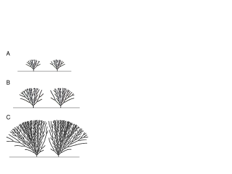 Two Laplacian trees growing near each other in the half plane