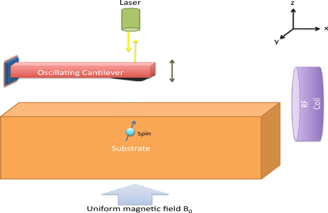 (Color online.) MRFM system: model and operation. A cantilever with a ferromagnetic tip oscillates in close proximity to a substrate with a free spin. A uniform magnetic field