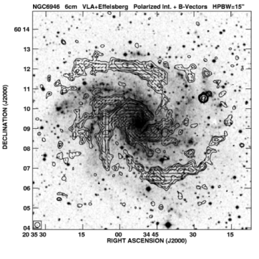 Polarized synchrotron intensity (contours) and magnetic field orientation of NGC 6946 (obtained by rotating