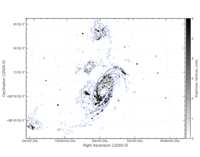 Luminosity-weighted distribution of OB stars from the Subaru Suprime-Cam catalog. Note the two stellar arcs above and below the M82 disk. Overplotted are the