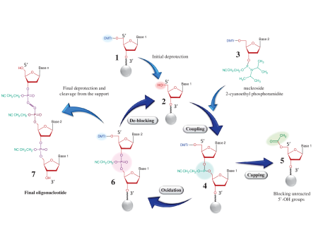 Main Steps of Column-Based Oligo Synthesis process of Section
