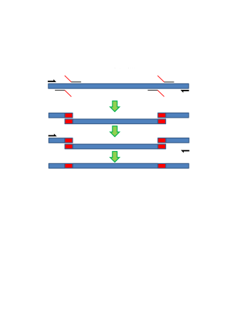Rewriting (Deletion and Insertion Edits) via gBlocks. This method is used when edits of relatively short length are required, as it is cost efficient and simple. Primers corresponding to unique contexts in the encoded DNA are used to access the edit region, which is subsequently cleaved and replaced by the gBlock.