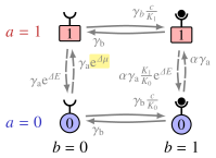 Four-state model for a single receptor. Vertical transitions correspond to a change in activity, while horizontal transitions correspond to a change in the occupancy of the receptor. The phosphorylation rates in (