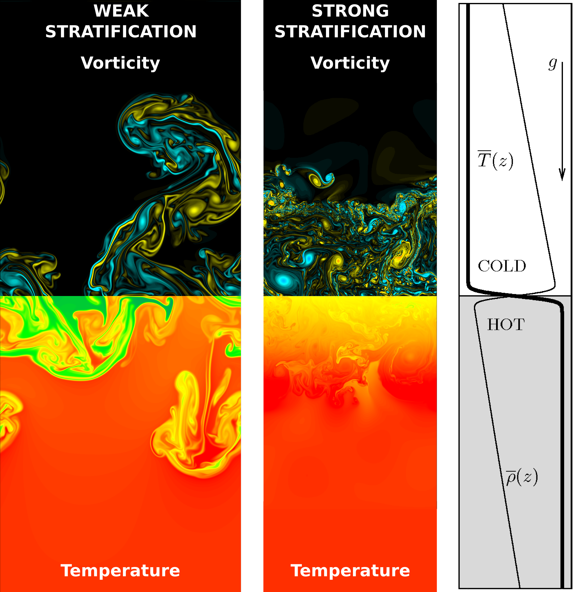 Right panel: initial vertical density and temperature profiles. Left and middle panels: Vorticity and temperature snapshots with weak and strong stratification, respectively. Notice the free rising plumes in the left panel typical of non-stratified RT system. In the middle panel stratification is stronger and turbulence is confined below and above the unmixed fluid at rest: at the boundary the temperature profile overshoots.