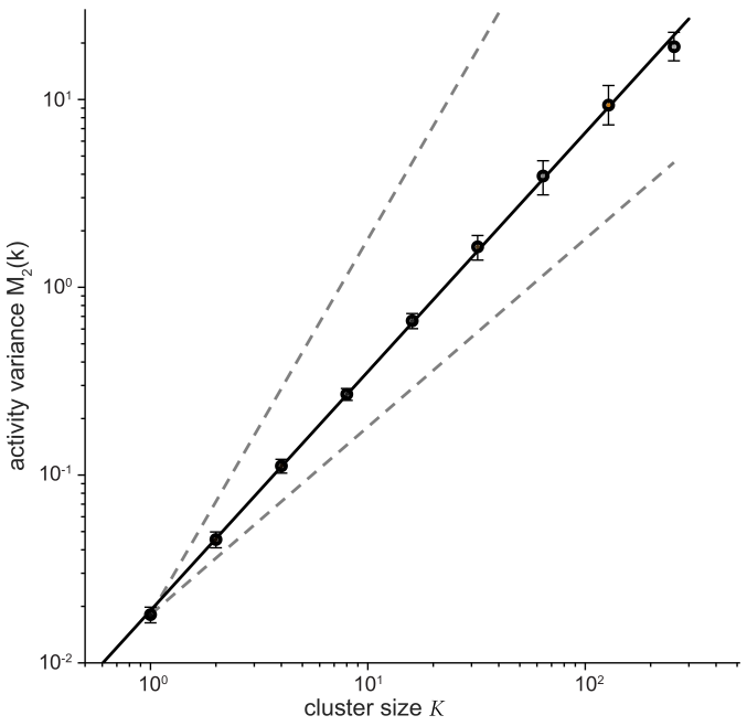 Variance of coarse–grained activity vs cluster size, from Eq (